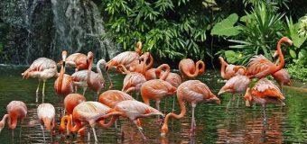 Khách du lịch hào hứng khám phá vườn chim nhiệt đới tại FLC Sầm Sơn